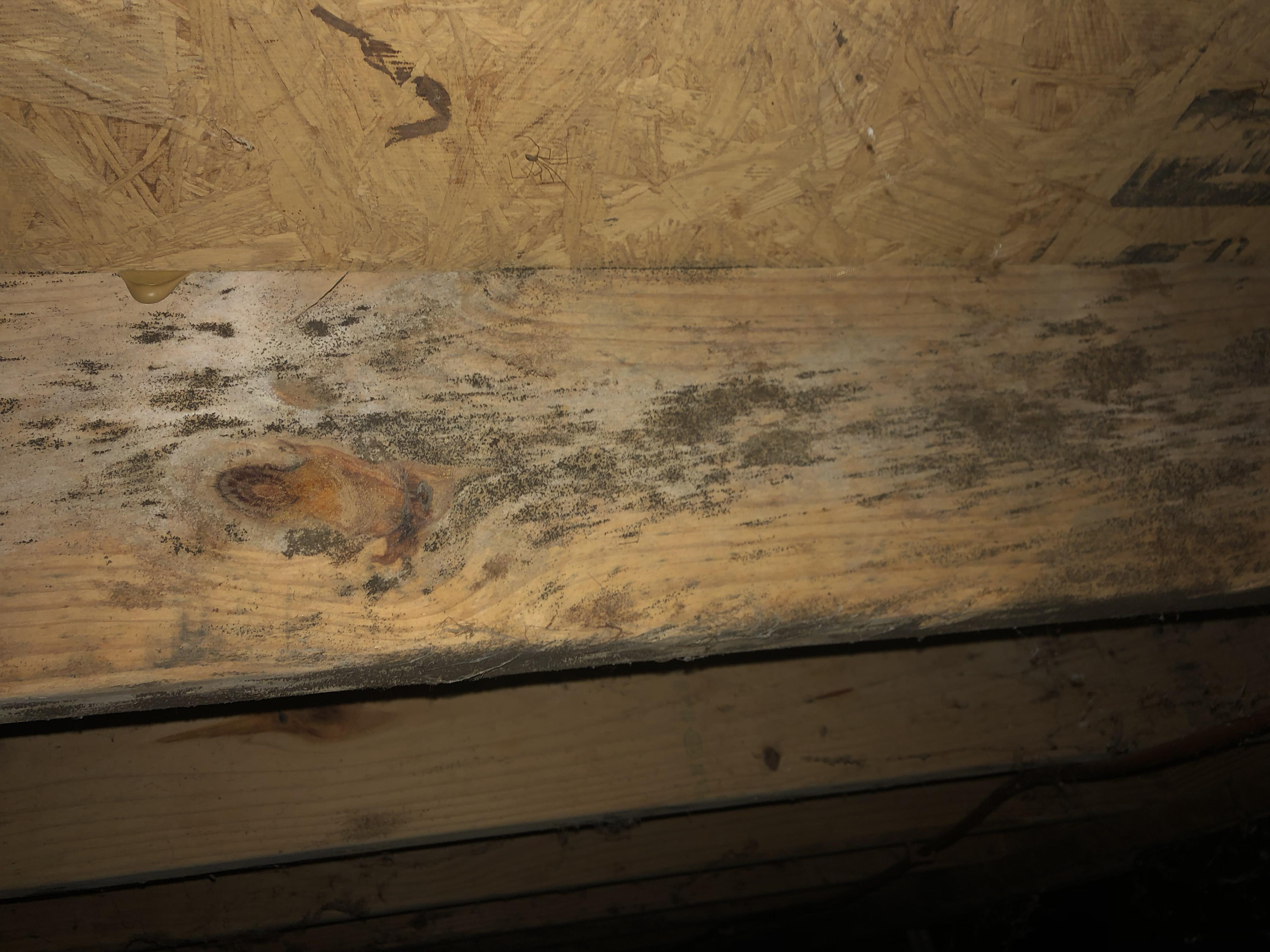 Mold found on the wooden floor support in the crawlspace